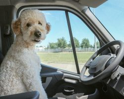 10 Hypoallergenic Dog Breeds