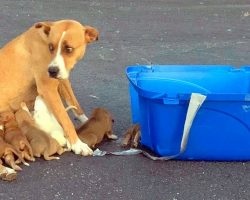 Owner Dumps Mama Dog And Her 9 Weak Puppies In Parking Lot Along With A Crate