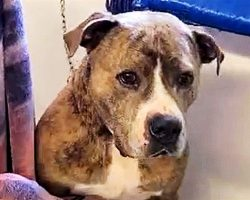 After Being Rejected For 720 Days, Dog Sits By Himself In Sad Corner Of Shelter