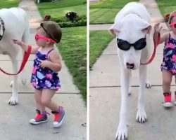 Toddler Insists On Holding The Leash When Taking Her Deaf-Blind Dog For A Walk