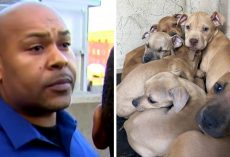 Repeat Offender Caught Shooting His Dogs With A Pellet Gun, 36 Dogs Seized