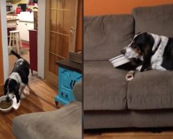 Dog Wants To Relax With The Family While Eating, Carries Food Bowl To The Couch