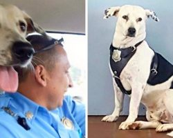 Scared Dog With Horrible Scars Walks Into Police Station, Gets Adopted By Cops