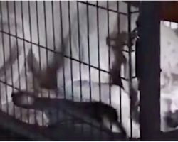 Grieving Dog Wouldn't Leave Crate When Dad Died And Began To Starve Himself