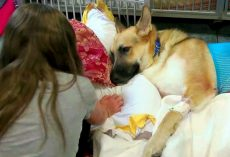 Rescue Dog Repays Family By Shielding Their Daughter From Deadly Rattlesnake