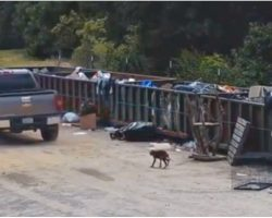 Woman Dragged Bony Puppy Over To Trash Site, He Struggled To Hobble After Her