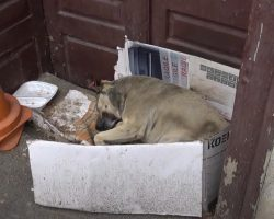 Dog Had Been Homeless On The Street For 6 Years When A Tourist Intervened