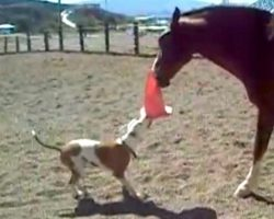 Dog Asks Horse To Play Tug-Of-War With Her, And The Sweet Horse Lets Her Win