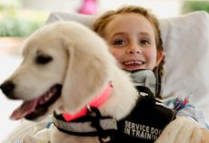 Puppy Makes Little Girl Smile Again After Multi-Vehicle Car Crash Paralyzes Her