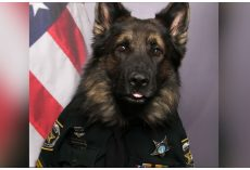 Police K9 Corporal Chico Poses In Official Uniform For ID Badge Photo Shoot