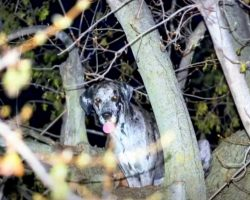 120lb Great Dane Stranded 20 Feet Up A Tree While Chasing Raccoons Gets Rescued By Firefighters