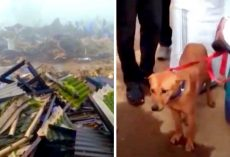 Dog Watches His Family Get Crushed Under Landslide, Goes Into Heavy Depression