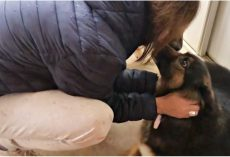 Woman Adopts Abused Dog With Dead Pups In Womb, Has To Give Her Back & Broke Down