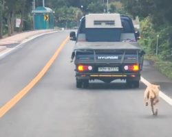Mama Dog Chases After The Truck That Took Her Puppies