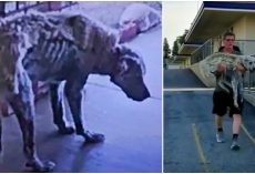 Woman Tracks Down Skeletal Dog From Screenshot & Runs With Him In Her Arms