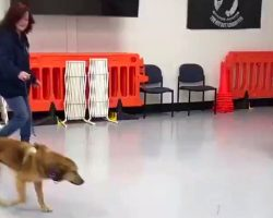 Soldier Saves Stray Dog In A Foreign Land, Now She Hopes The Dog Remembers Her