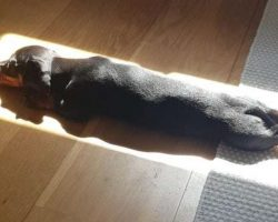 Dog Who Loves Sleeping In Sunlight Finds The Ideal Spot To Nap