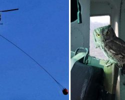 Owl Flies Inside Helicopter To Thank Pilot For Fighting California Wildfire