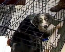 Missing Dog Was Captured After 4 Years, But His Owner Didn't Want Him Back