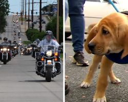 Over 500 Bikers Ride Out In Huge Rally To Raise Awareness About Animal Abuse