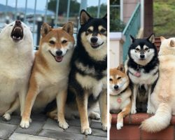 One Rebel Dog Always Messes Up Their Family Photo Sessions