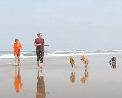 Rescue Takes Strays To Beach To Leave Painful Memories Of Their Pasts Behind