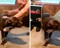 Man Duct Tapes His Rescue Dog's Legs And Jump-Kicks Him Across Room For Laughs