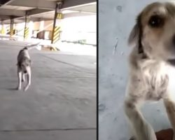 Lost Dog Cries Upon Seeing Dad Again After 3 Long Months Apart