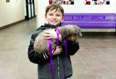 Little Boy Shows Heart By Choosing Oldest Dog In The Shelter Whom No One Wanted
