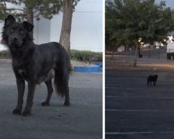 Friendly Stray Didn't Trust Humans, Was Careful Not To Lead Them To Her Pups