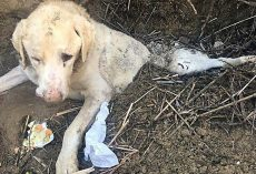 Dog Was Betrayed And Buried Alive In The Woods All Alone