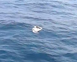 They See Trash Floating In The Water, Find Helpless Animal Imprisoned Within