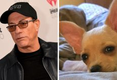Jean-Claude Van Damme Saves Chihuahua From Euthanasia For Having Wrong Passport