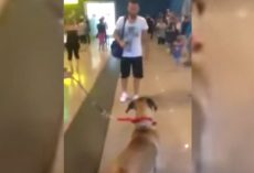 Dog Stops And Stares At The Owner He Hasn't Seen In Three Years