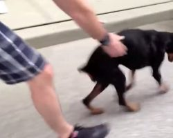 Couple Never Gave Up On Their Paralyzed Dog, And One Day She Walked Again