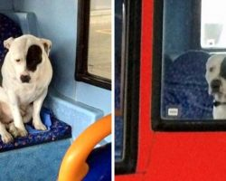 Bus Driver Finds Lonely Dog On His Bus, Stays With Him All Night To Comfort Him