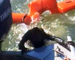 "Fisherman Throws Life Jacket To Save Drowning Dog, But It's ""Not A Dog At All"""