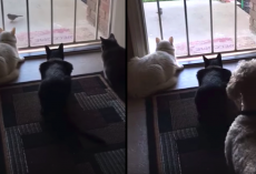 Cats Are Doing Some Bird-Watching When The Dog Shows Up And Ruins It All