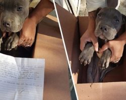 Courageous Boy Leaves His Helpless Puppy At Shelter With A Note So His Dad Can't Beat It Anymore