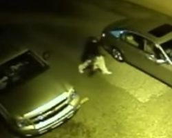 Thug Breaks Into Truck And Steals Dog, Throws Her Into His Car Like A Ragdoll