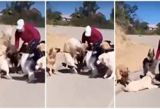 Dog Walker Receives Death Threats After She Was Caught Slamming Golden To Ground