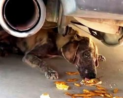 """Woman Sees """"Dead Dog"""" Under Her Truck, Stoops Down To Have A Look And Freezes"""