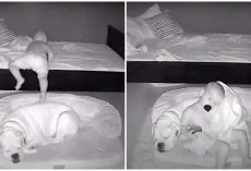 Toddler Sneaks Out Of Bed In Middle Of Night To Cuddle Up Next To Best Friend