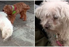 Cavapoo Finds 16-Year-Old Blind & Deaf Dog Who Vanished In The Ice-Cold Night