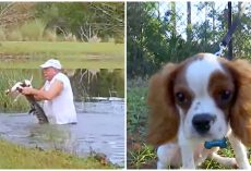 Man Pries Open Gator's Mouth To Save Tiny Pup After Gator Dragged Him Into Pond