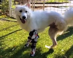Dog Was Born With Just One Leg, She's Grown Up To Inspire Kids Just Like Her