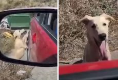 Homeless Dog Approaches Stranger's Car In Hopes Of Being Rescued
