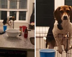 Puppy Thinks Mom Isn't Home And Tries Escaping, Then Makes Eye Contact With Her