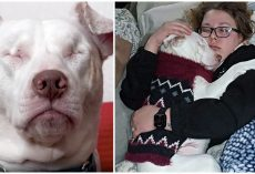 Blind & Deaf Shelter Dog Thought No One Would Love Him, Until He Met His Family