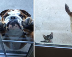 15 Pets Who Instantly Regret Going Outside
